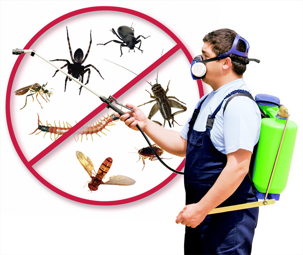 Is Pest control a landlord or tenant responsibility?